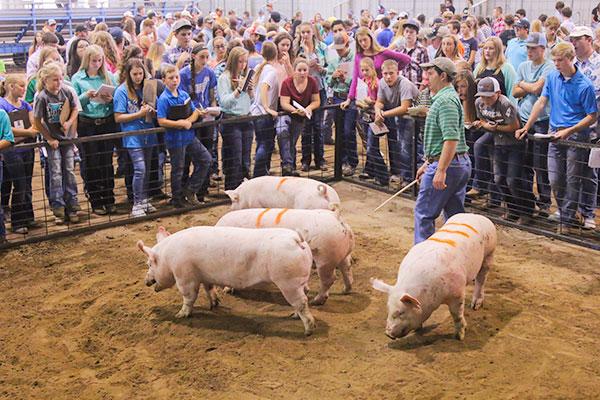 Oklahoma Farm Bureau State Fair Livestock Judging Contest